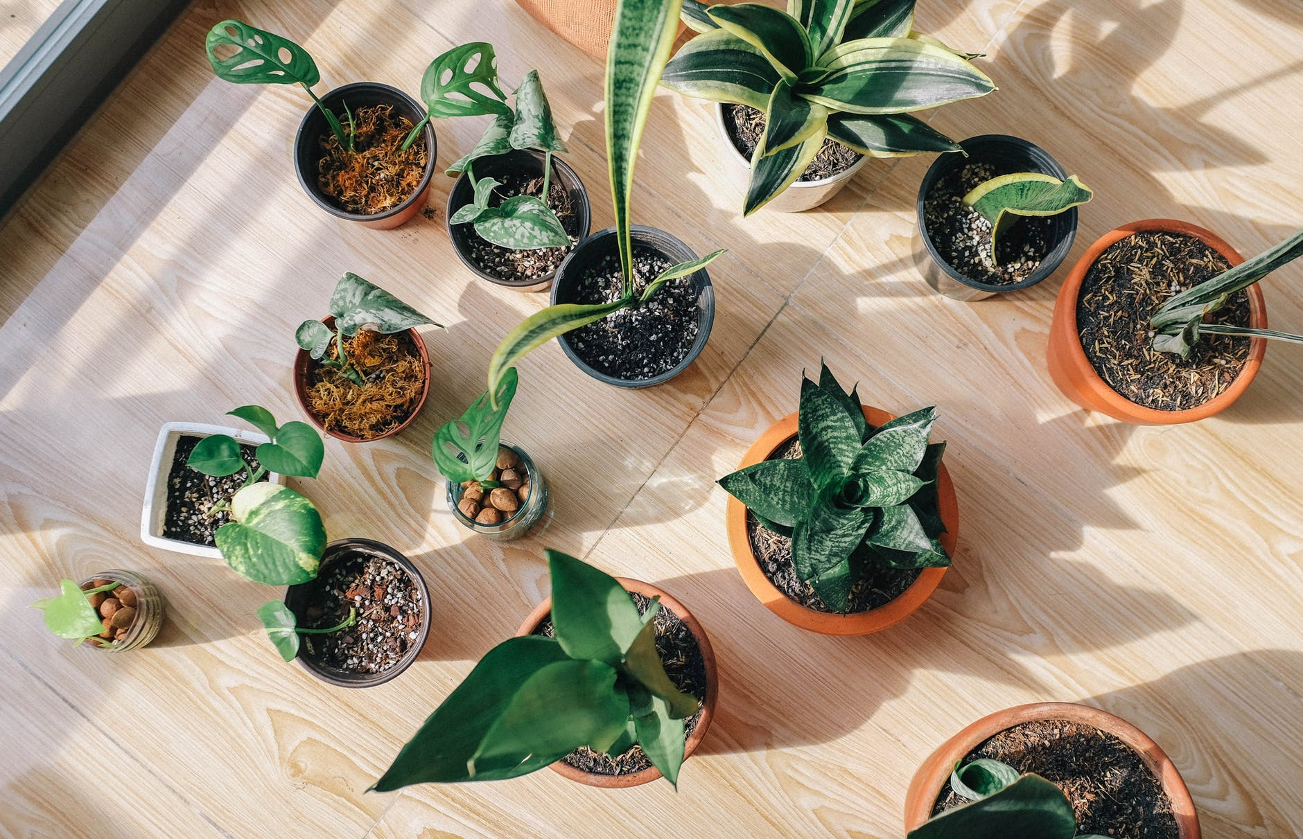 Collection of houseplants grown from cuttings